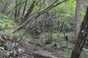 ■野やルートの登り口:割と平坦な道が続く。